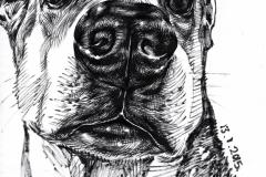 dog-sketches