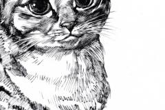cat-sketches