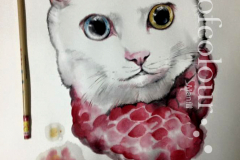 watercolour-cat